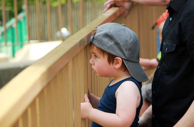 Baby boy at Zoo