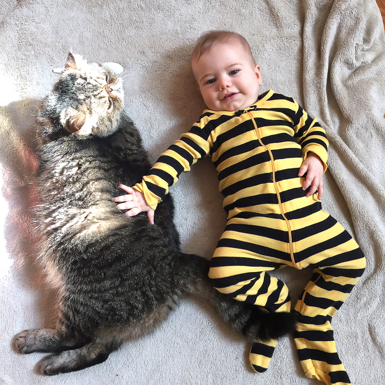 baby boy, 7 moths old, cute cat and a baby, DC mom blog